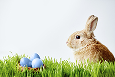 Easter bunny sitting in grass against white background